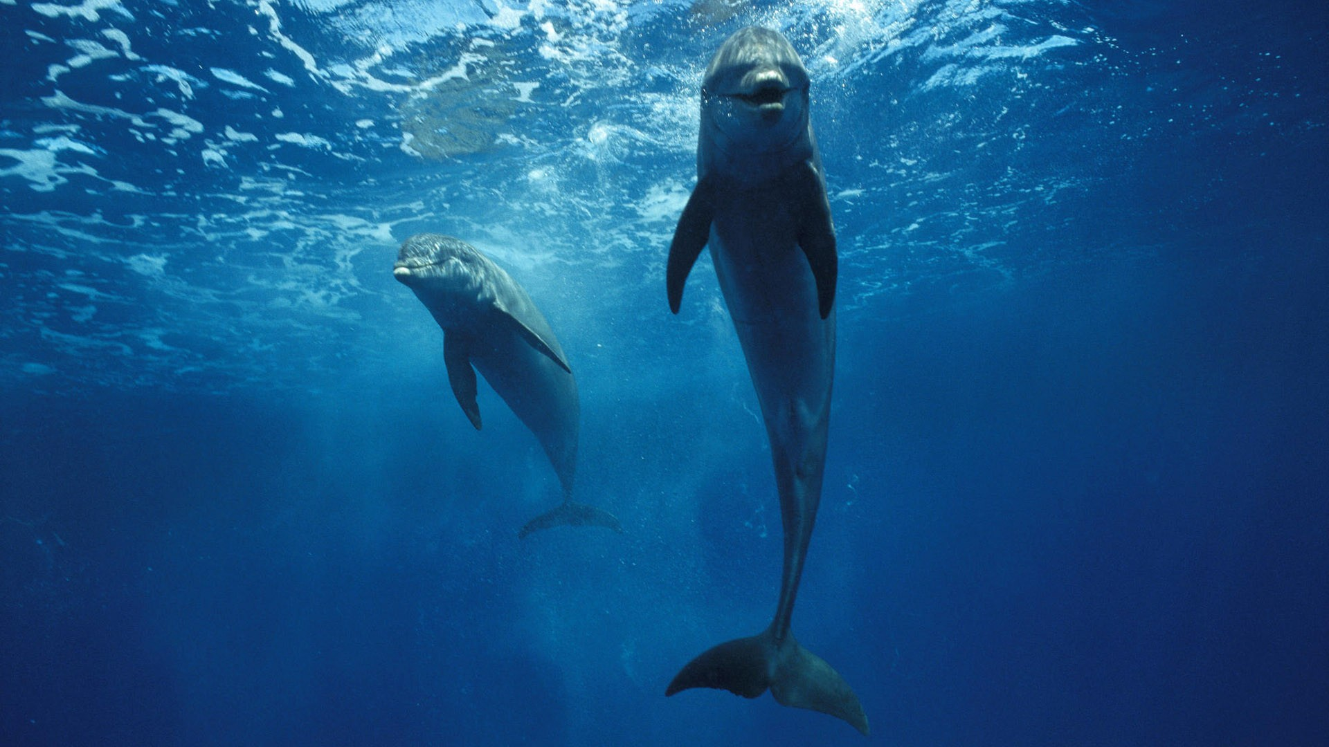 Desktop Backgrounds Dolphins Dolphins Dolphins Backgrounds 1920x1080