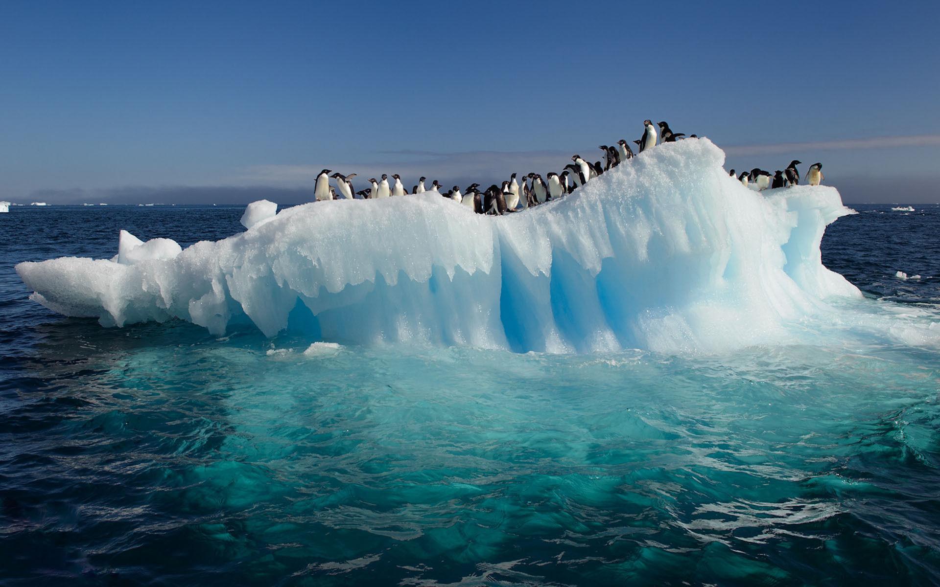 Wallpaper download best - Free Download Best Desktop High Resolution Wallpapers Of Ocean Ice
