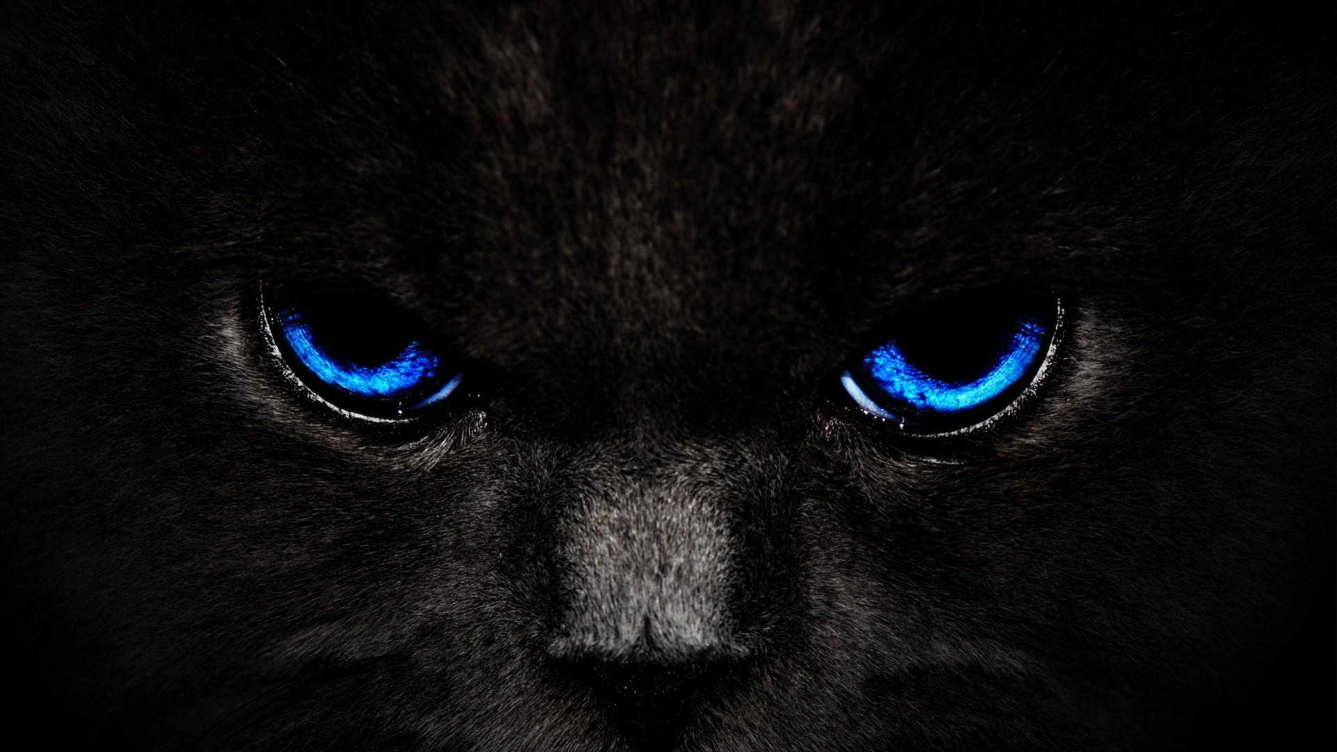 обои на рабочий стол глаза кошки на темном фоне № 237949 загрузить