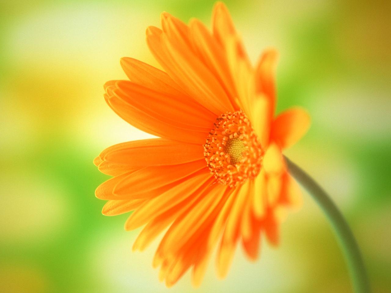 [33+] Spring Daisy Flower Wallpaper on WallpaperSafari