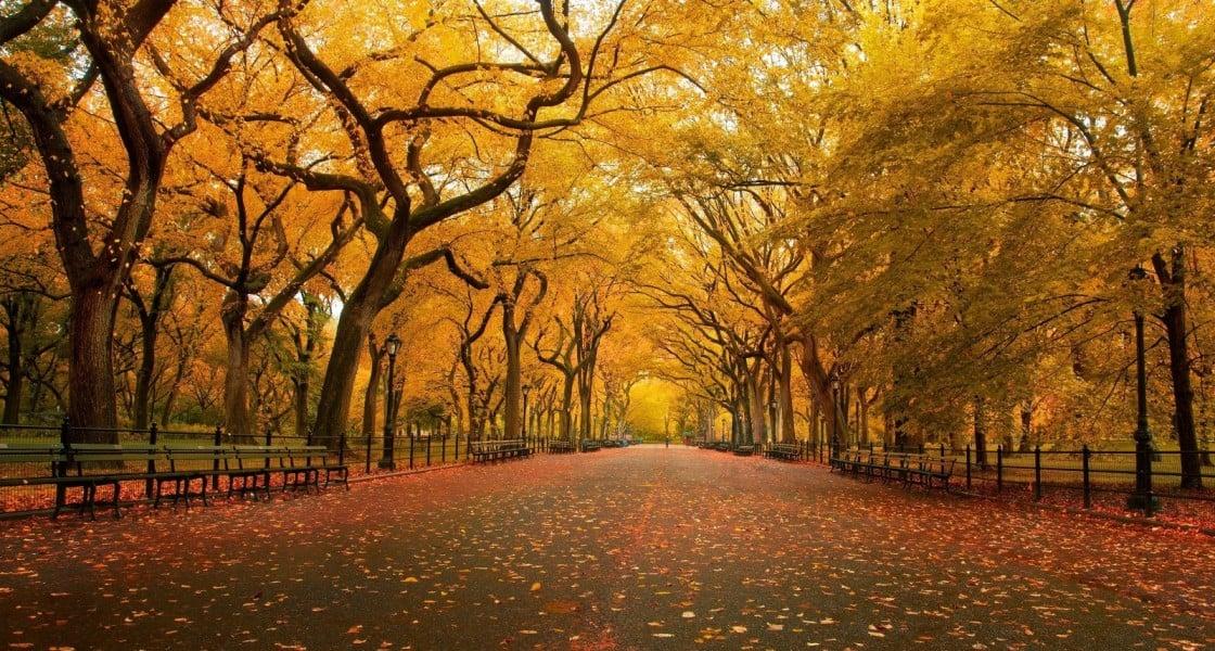 Autumn Scene Wallpaper 16001000 wallpapers55com   Best Wallpapers 1120x600