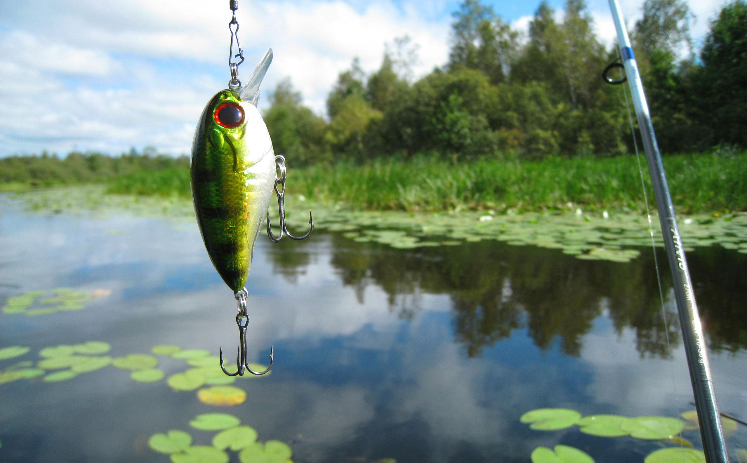 Download Sports Fishing HD Wallpaper 2558x1586