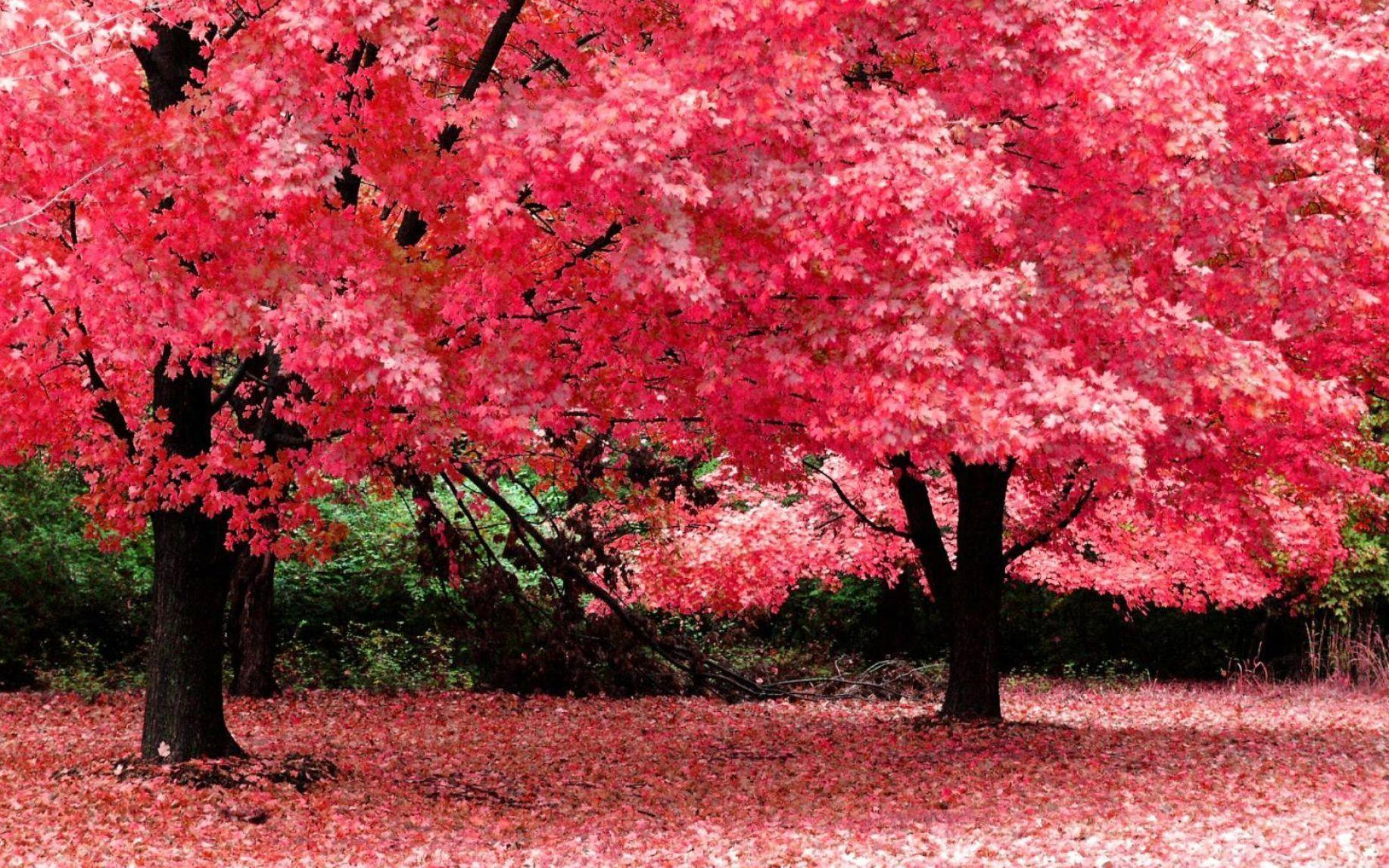 Pink Nature Wallpapers 1835x1147