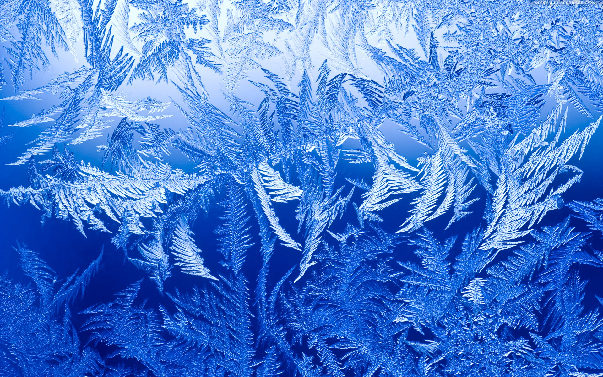 4 Ice HD Wallpapers Background Images 1920x1200