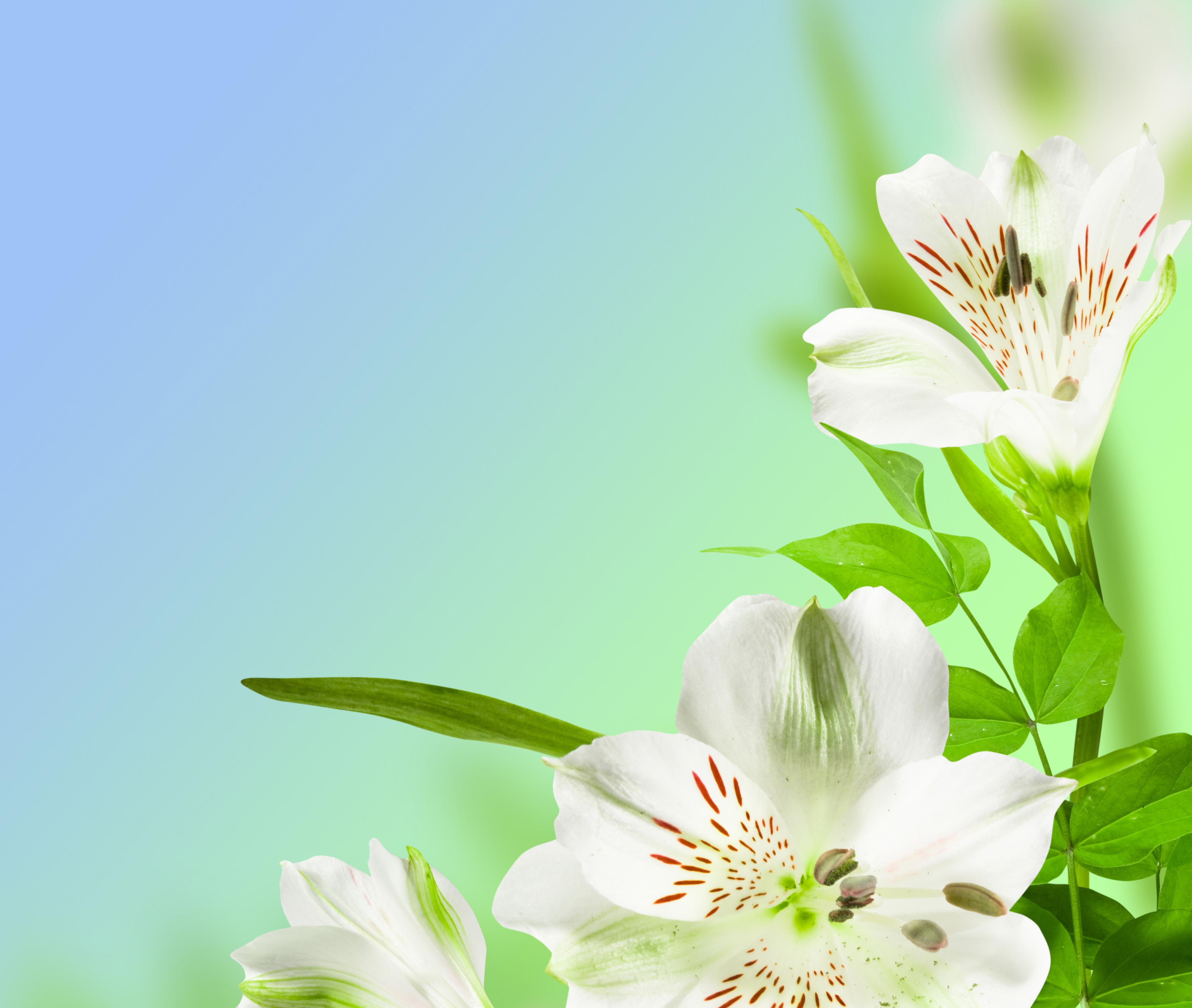 Desktop Spring Wallpapers Nexus 42Z38EU Picseriocom 4000x3383