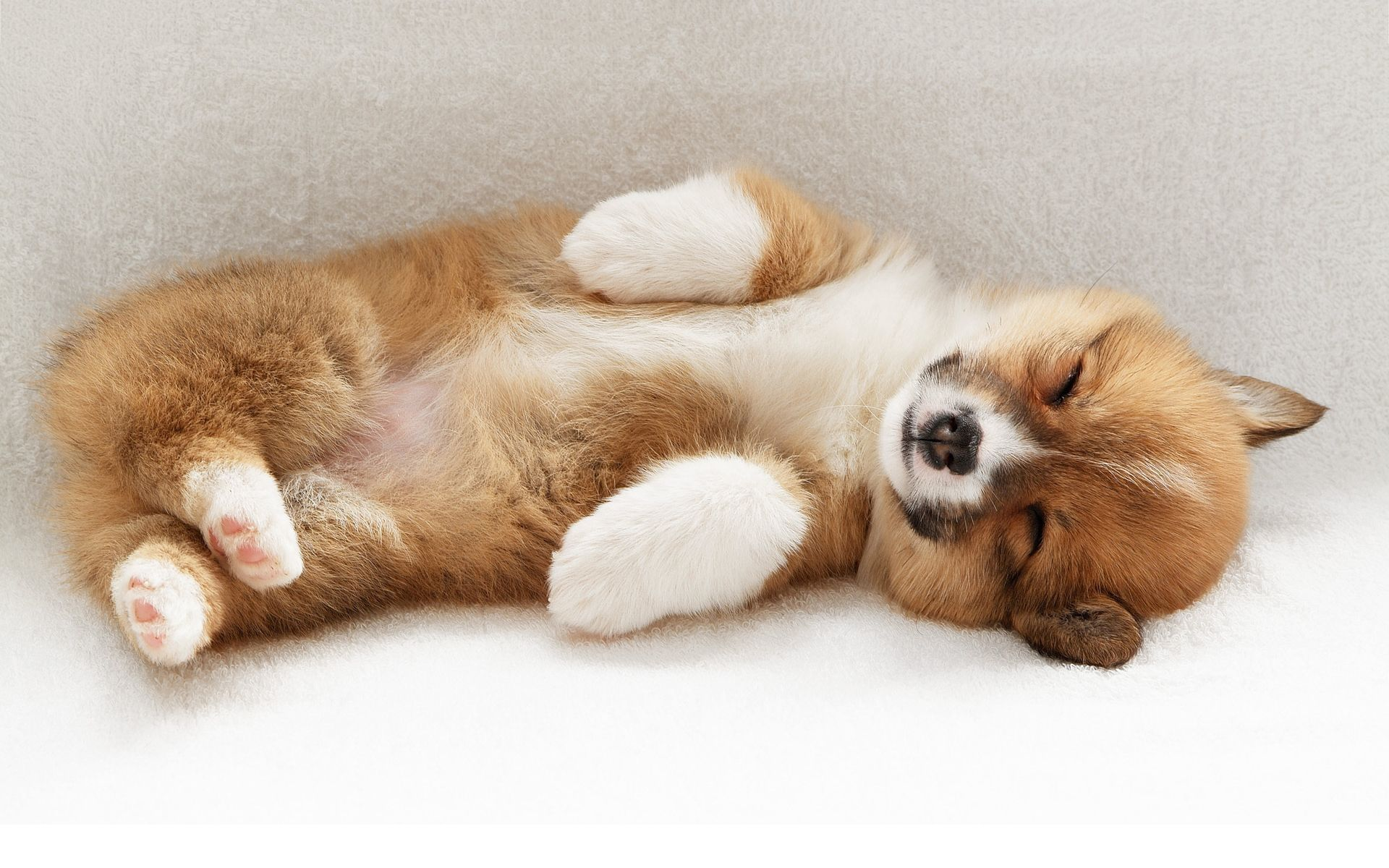 cute dog pictures Cute puppy sleep Wallpapers Pictures Photos 1920x1200