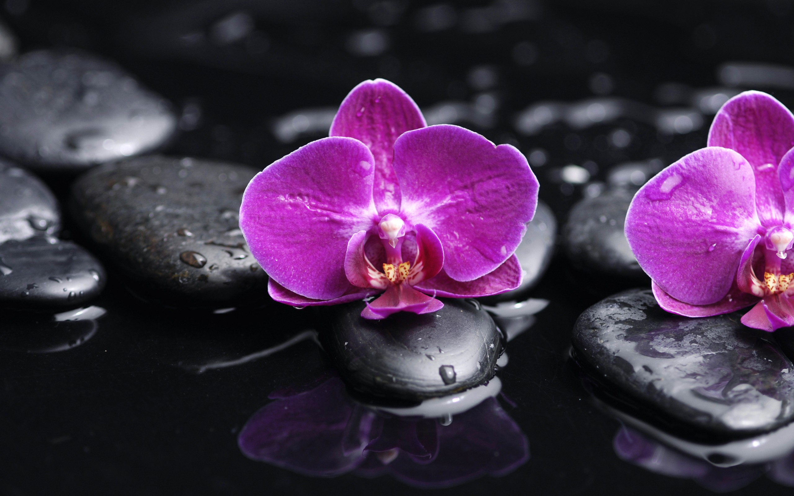 Back Gallery For purple orchid wallpaper 2560x1600