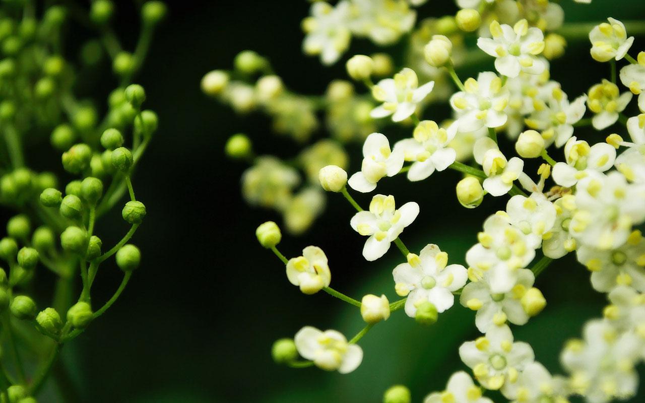flowers for flower lovers Beautiful flowers desktop 1280x800