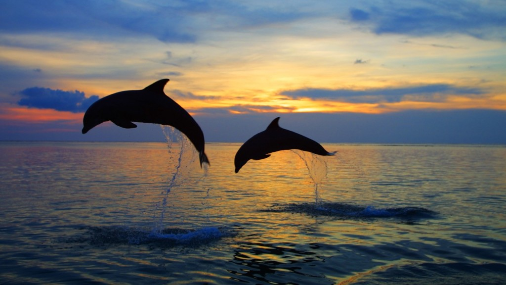 Dolphins Caribbean   hd wallpapers for windows 7   Dolphins Caribbean 1024x576