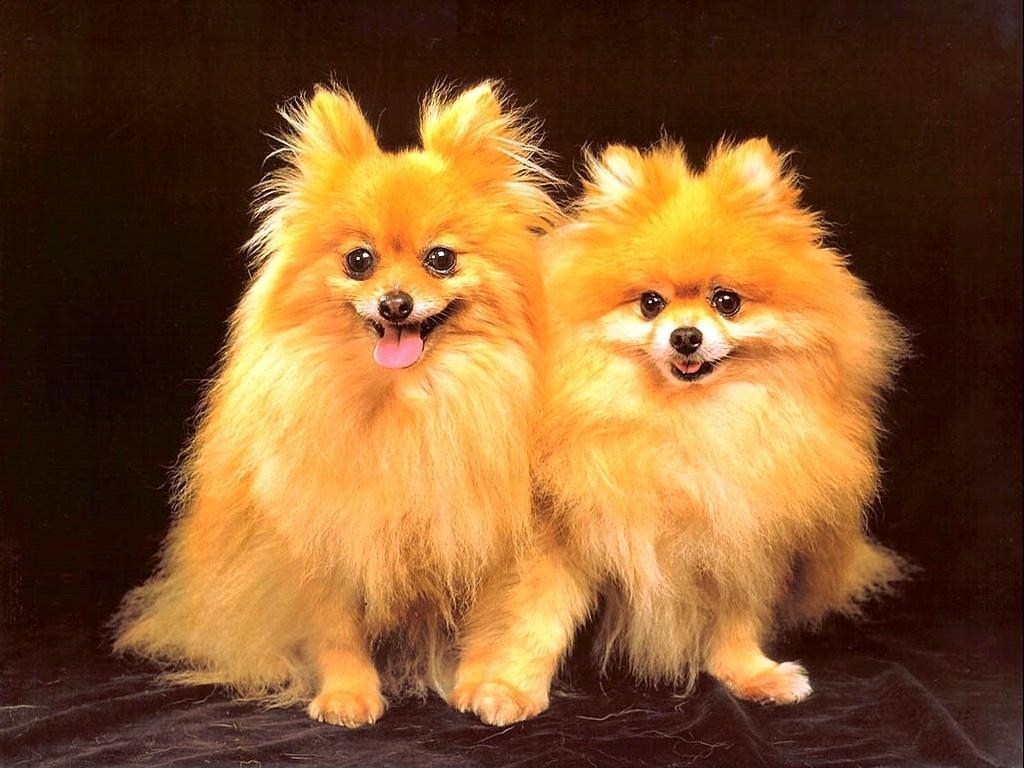 Cute Dog Wallpaper   Dogs Wallpaper 13936305 1024x768