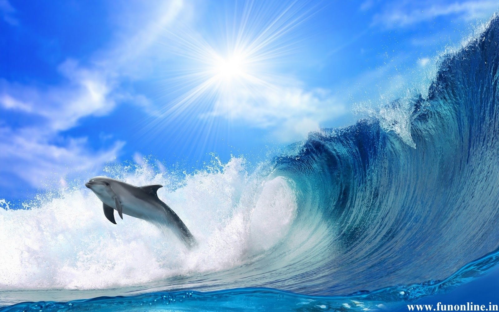 Dolphin Wallpapers Download Friendly Fish Dolphins Wallpaper 1600x1000