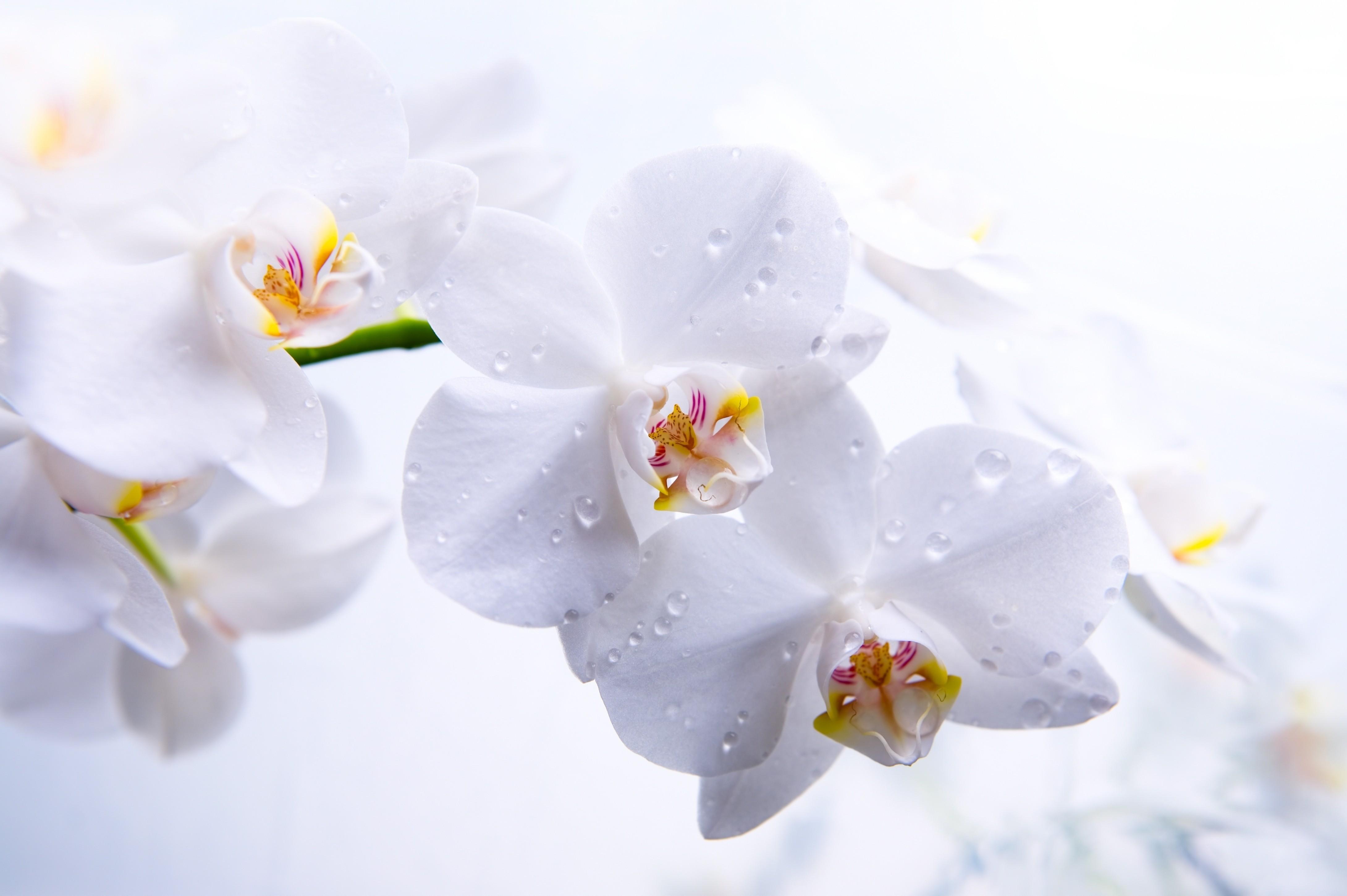 Flower - HD1920×1080