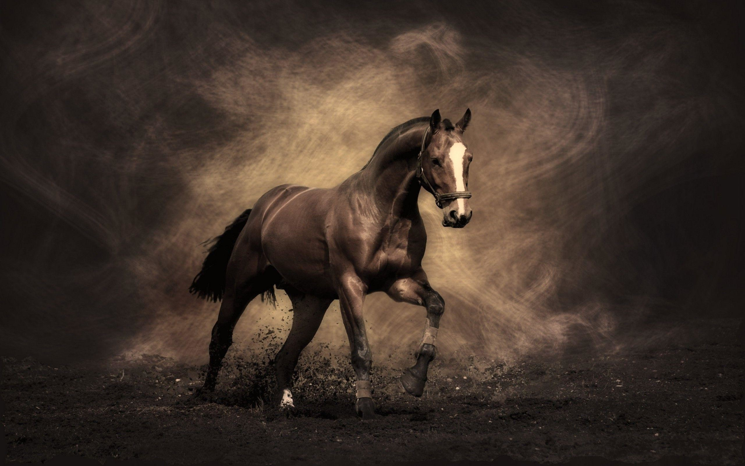 50 Fall Horse Wallpapers on WallpaperPlay 2560x1600