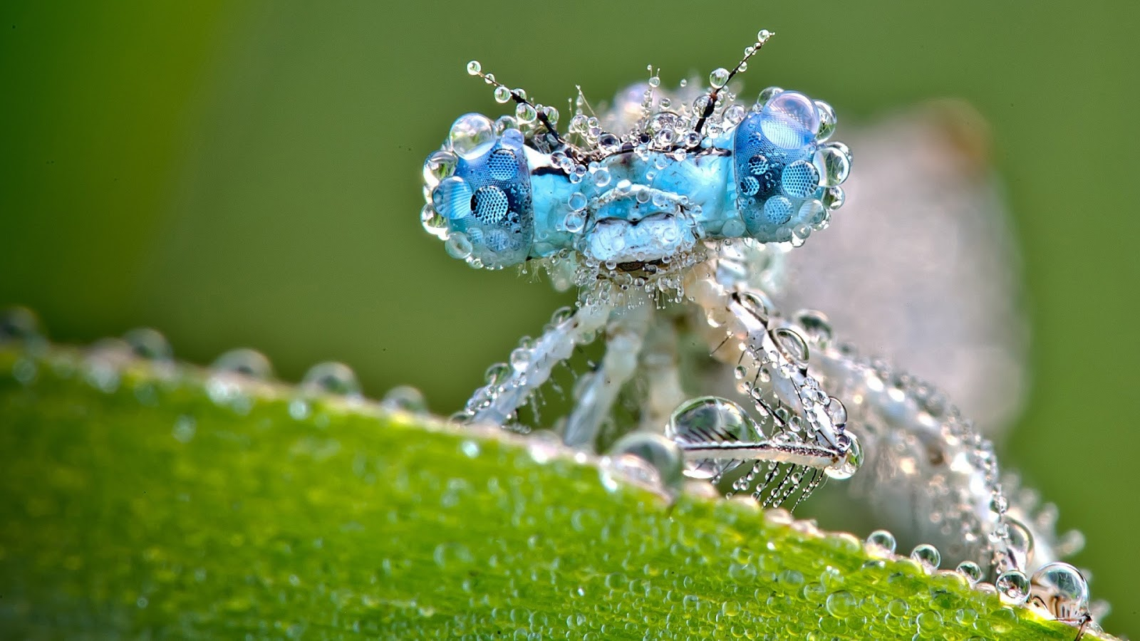 Shine HD Wallpapers Dragonfly Wallpapers HD 1600x900