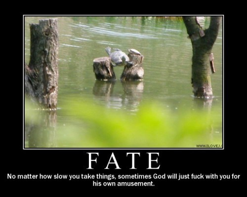 Fate Funny Pictures Quotes Pics Photos Images Videos of Really 500x400