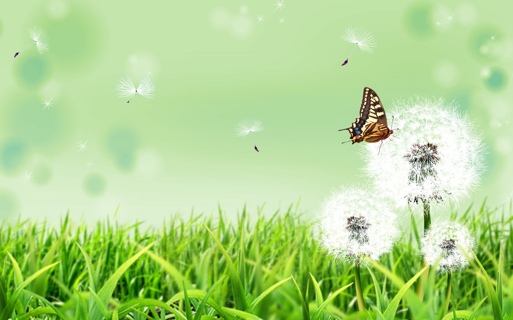 Download Butterfly on a dandelion wallpaper