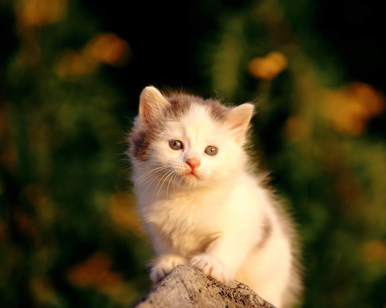 Fascinating Articles and Cool Stuff Cute Kittens Wallpapers 1280x1024