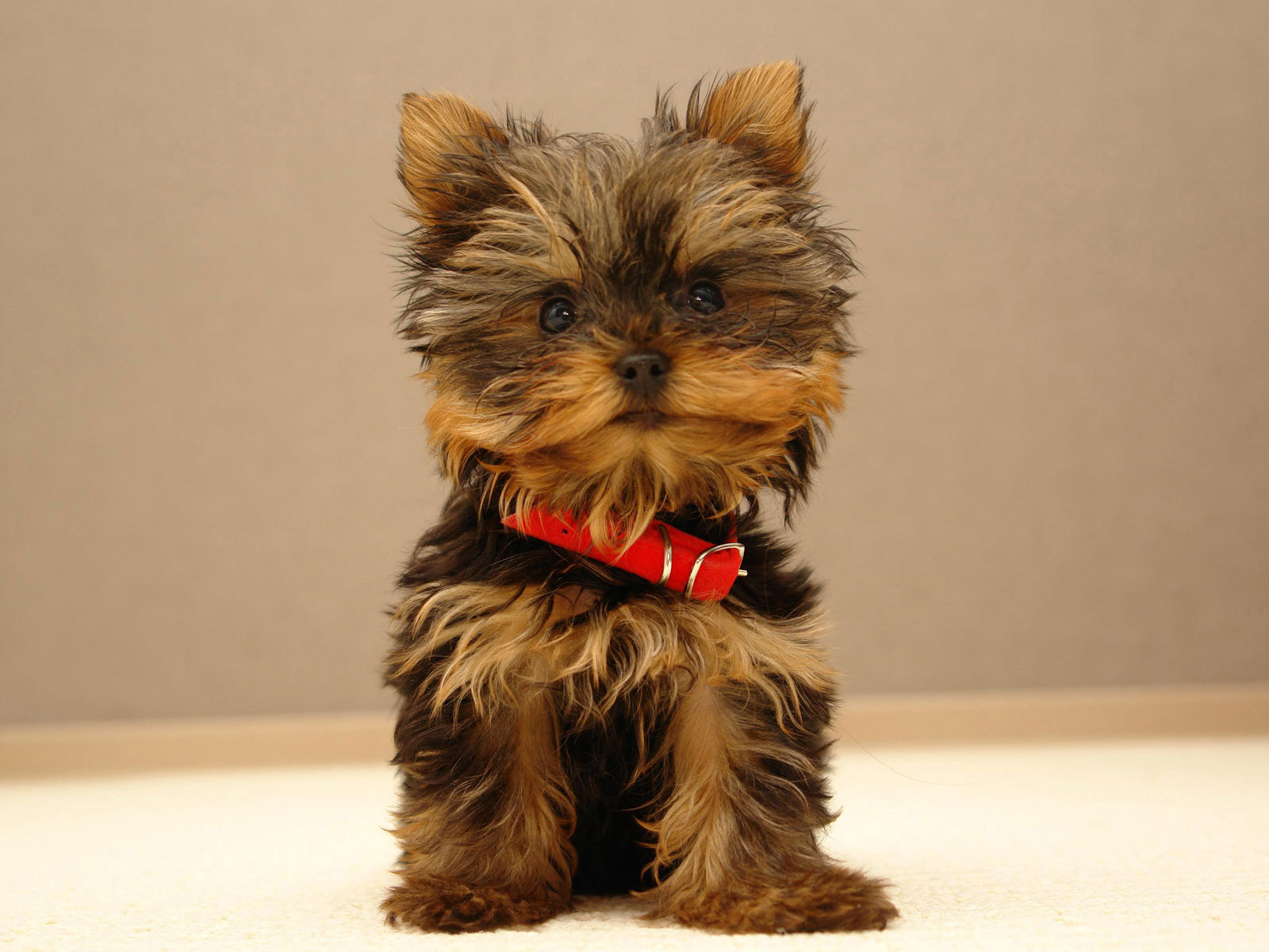 Cute puppy wallpapers Cute puppy stock photos 1600x1200