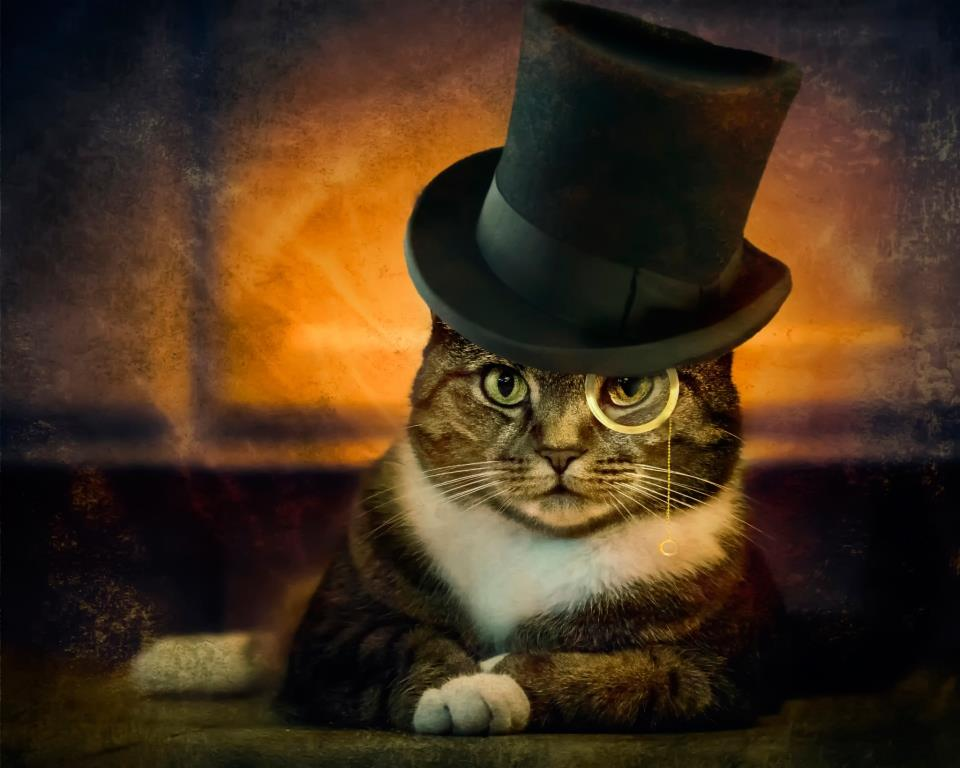 Funny cat images for laugh   humorous HD wallpaper PIXHOME 960x768