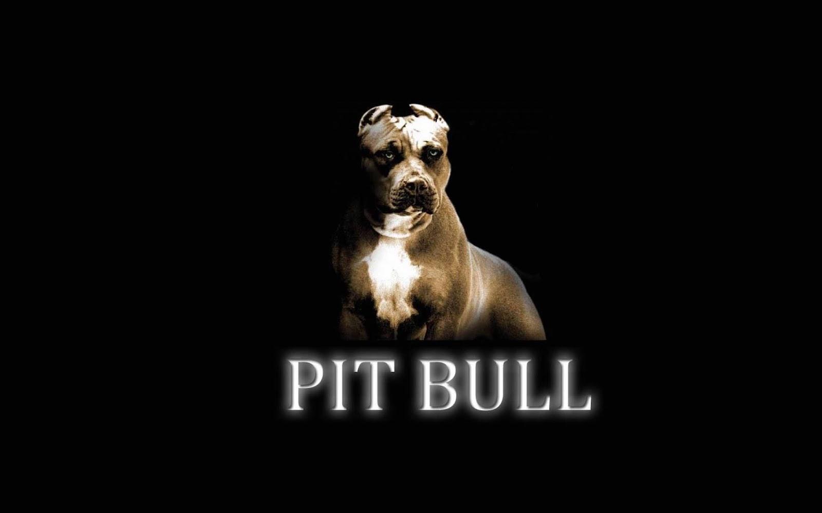 HD Wallpapers Pitbull Dog Wallpapers 1600x1000