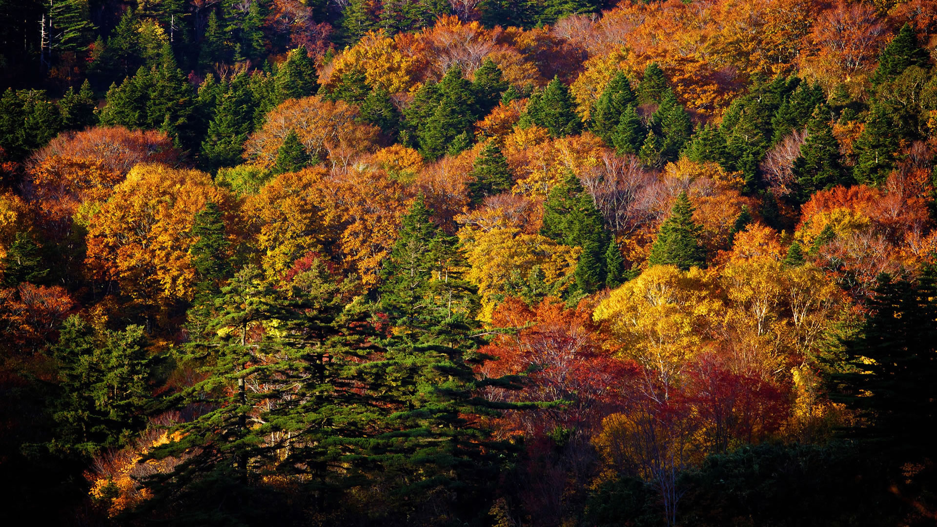 Fall Trees Wallpaper 31141 Hd Wallpapers Background 1920x1080