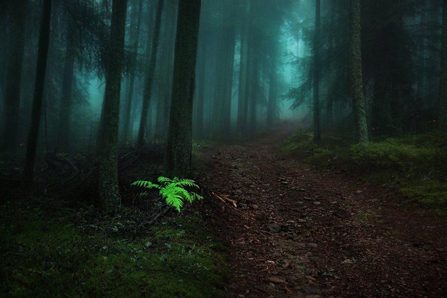 foggy forest wallpaper   ForWallpapercom 908x606