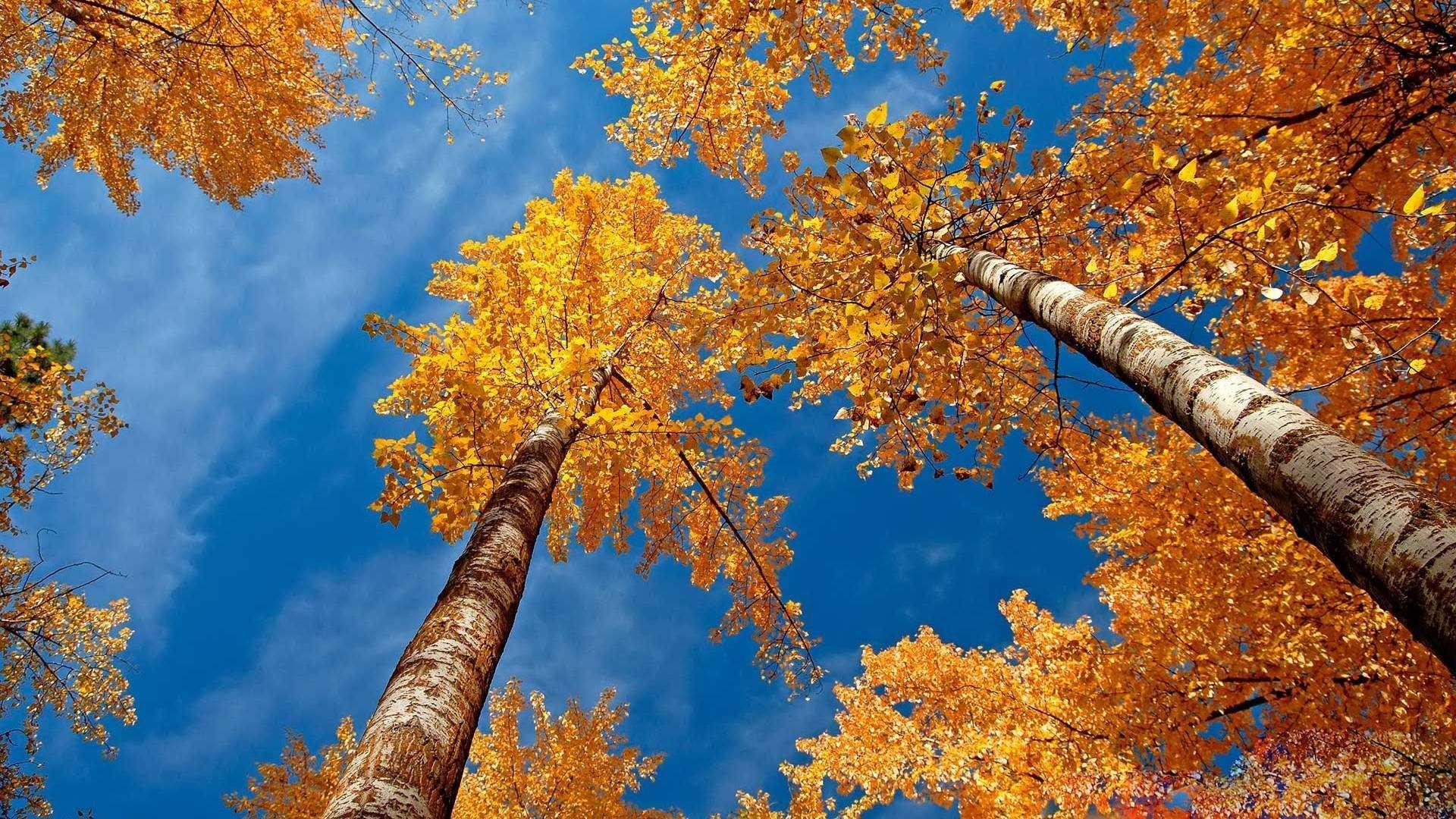 Fall Wallpapers Desktop on WallpaperSafari