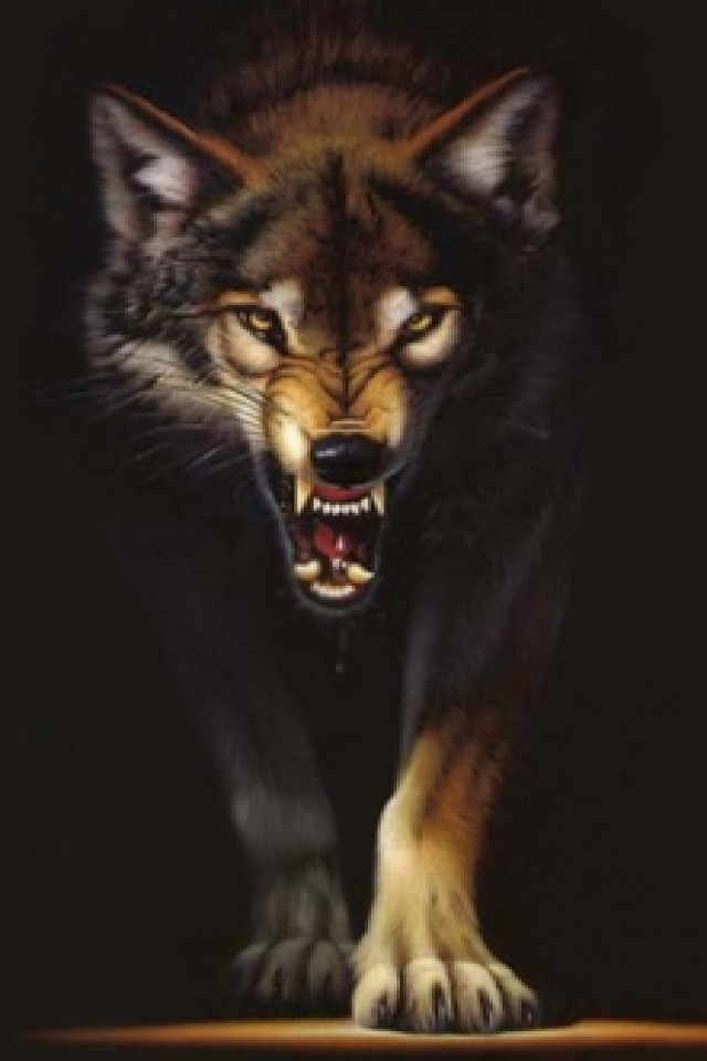 wolf iPhone wallpaper 640x960