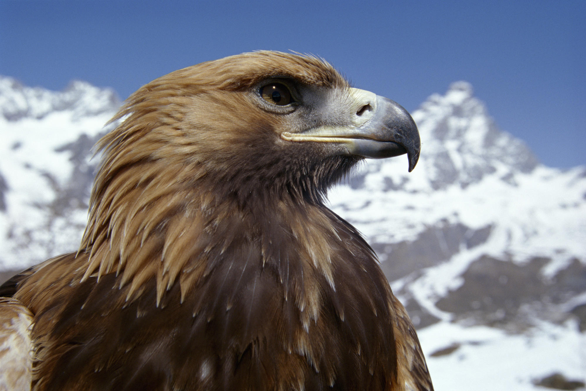 Animal Planet images Eagle HD wallpaper and background 2000x1333
