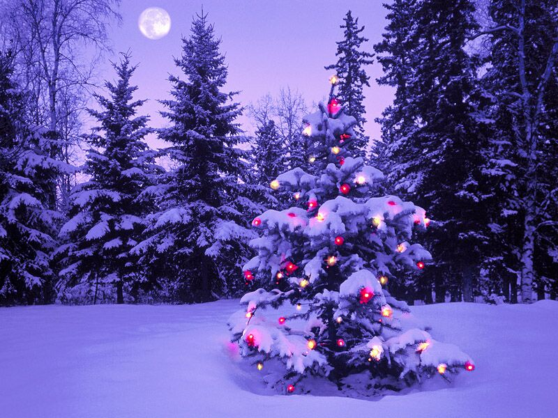Christmas In The Wilderness   Christmas Landscapes Wallpaper Image 800x600