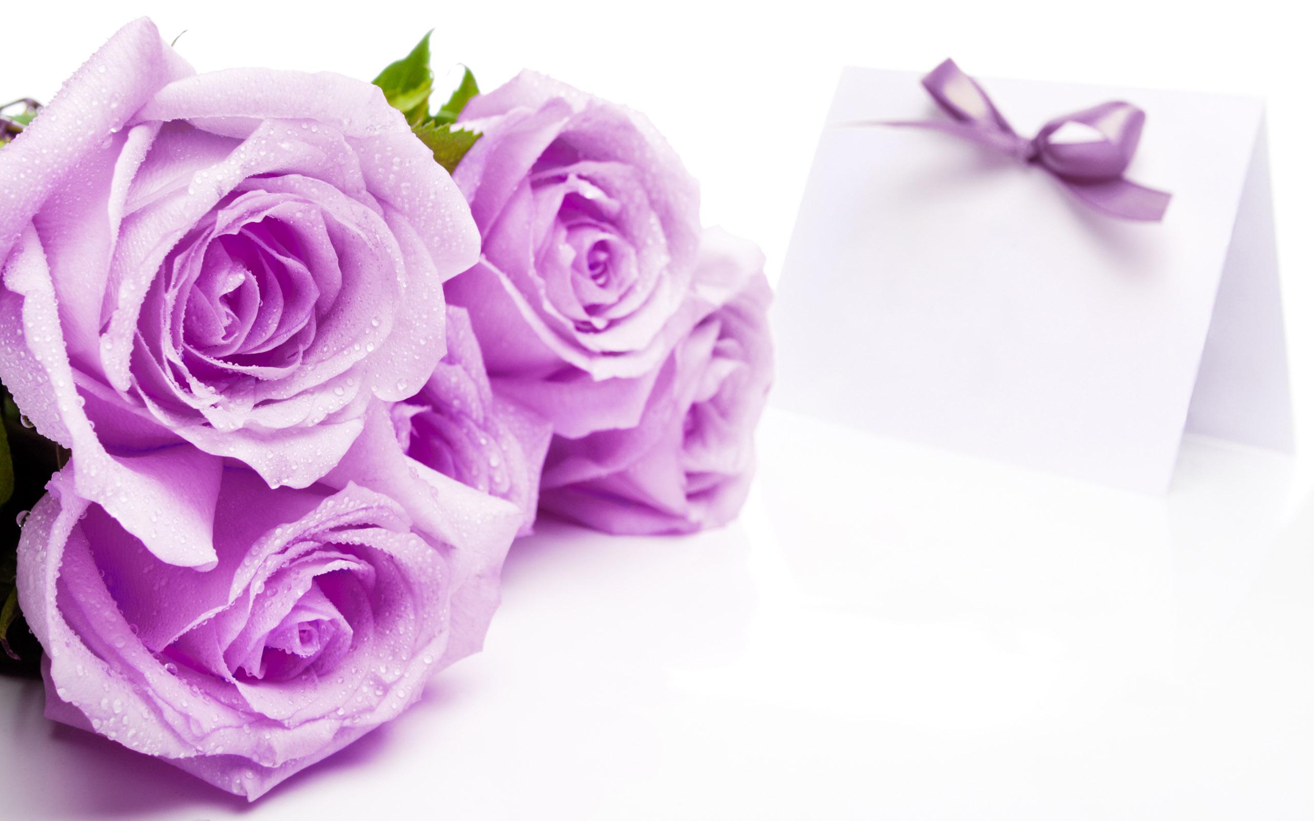 Rose Flower Images Wallpapers Wallpapersafari