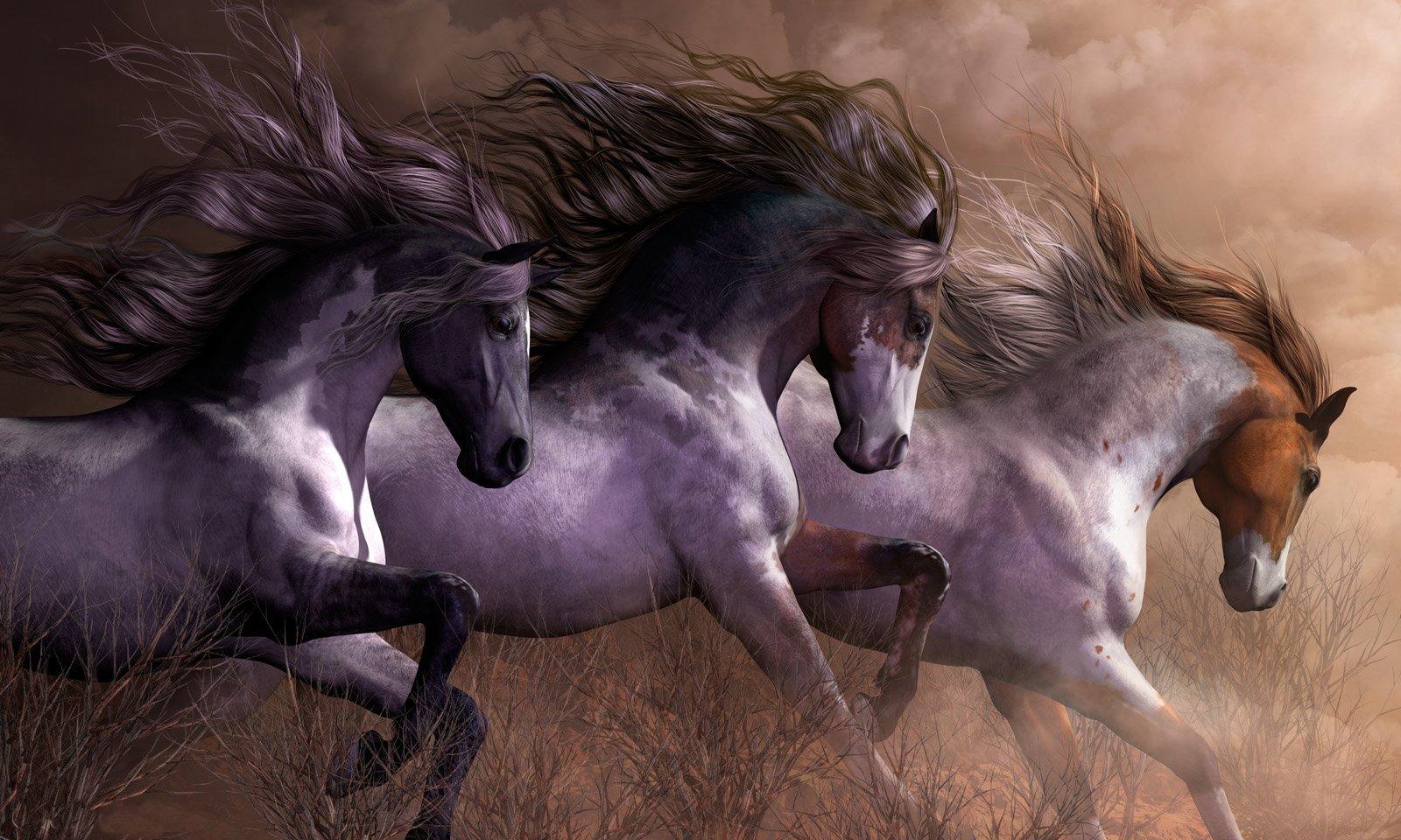 Beautiful Wild Horses wallpaper   ForWallpapercom 1600x960