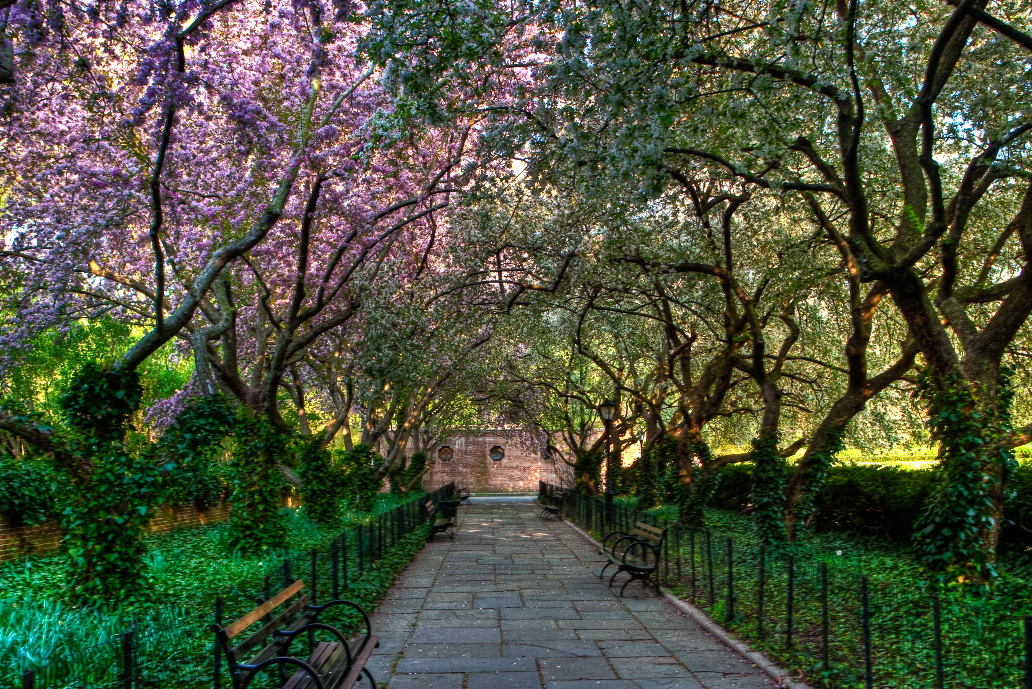 Central Park Conservatory Wallpaper   ForWallpapercom 3493x2334