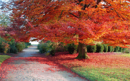 30 Absolutely Spectacular Autumn Wallpaper for your Desktop 500x313