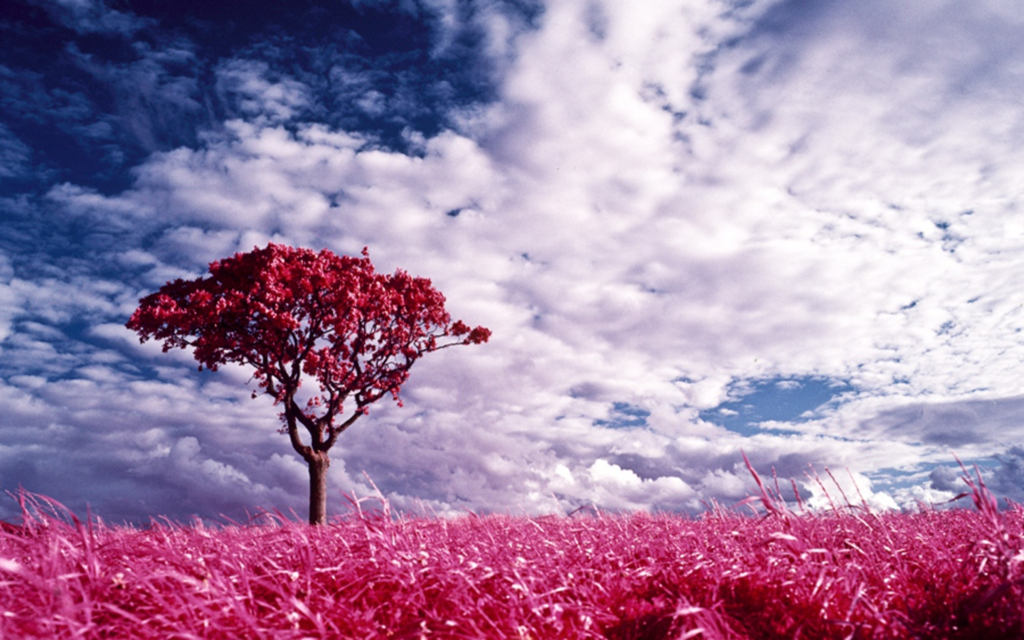 Nature Pink Land Desktop Wallpaper Pink Wallpaper 1440x900