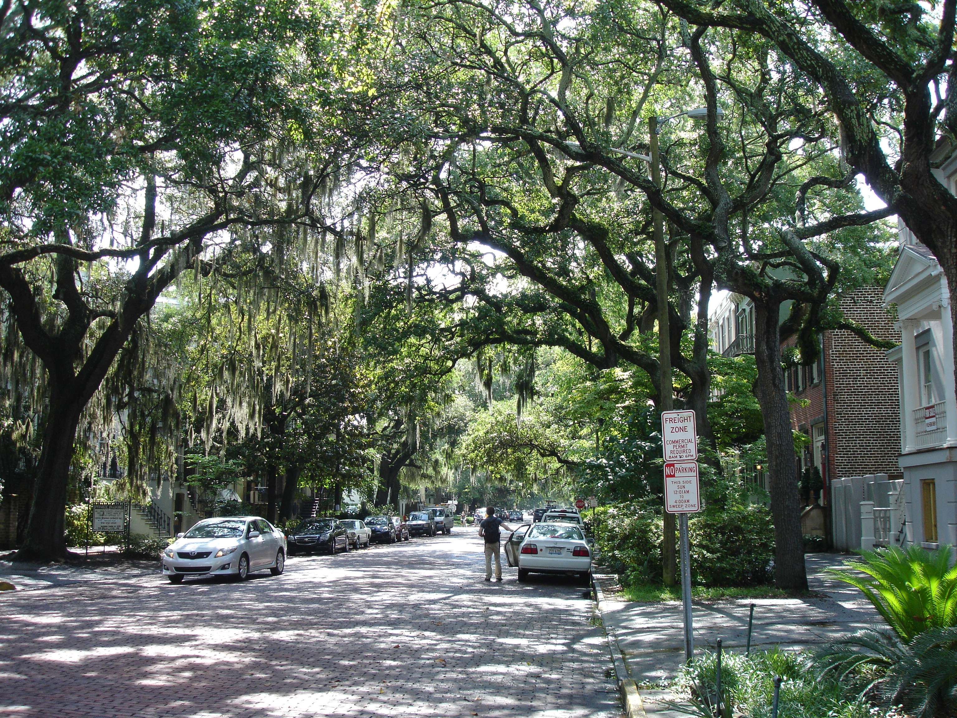 Savannah Images Crazy Gallery 3072x2304
