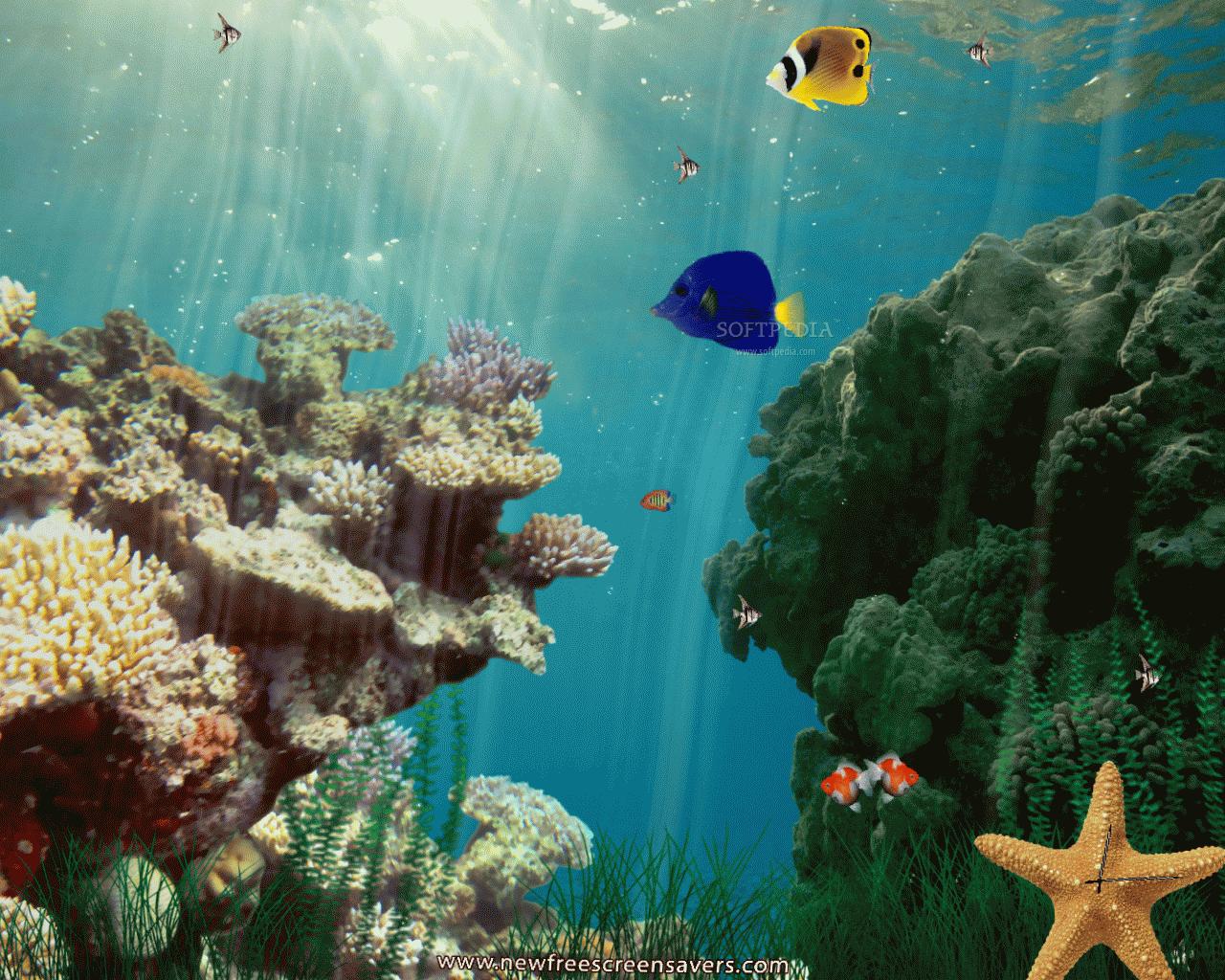 Animated Underwater Wallpaper - WallpaperSafari