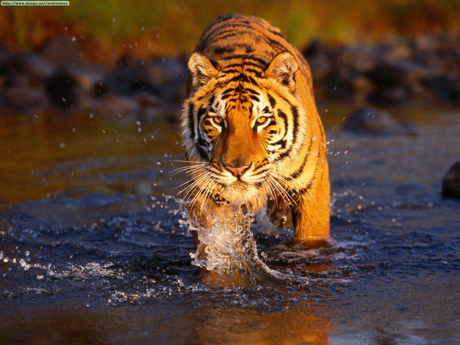Sundarban ISS Bangladesh ISS Bangladesh 1600x1200