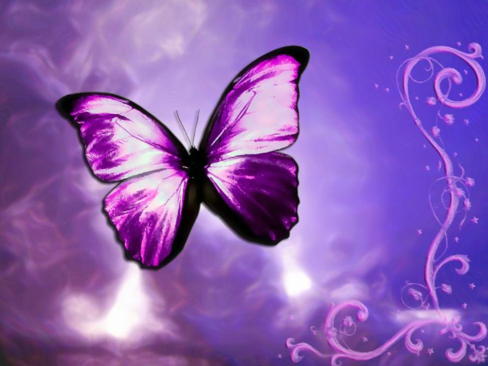 Fantastic Butterfly Screensaver   Animated Wallpaper Torrent Download 973x730