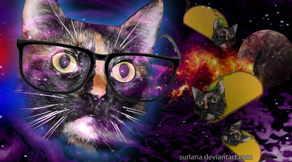 Hipster Cat Wallpaper Hipster Cat Taco by Surlana 1024x569