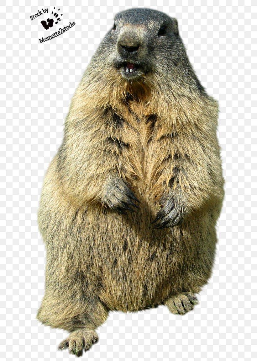 Groundhog Day Punxsutawney Desktop Wallpaper Funny Animal PNG 820x1150