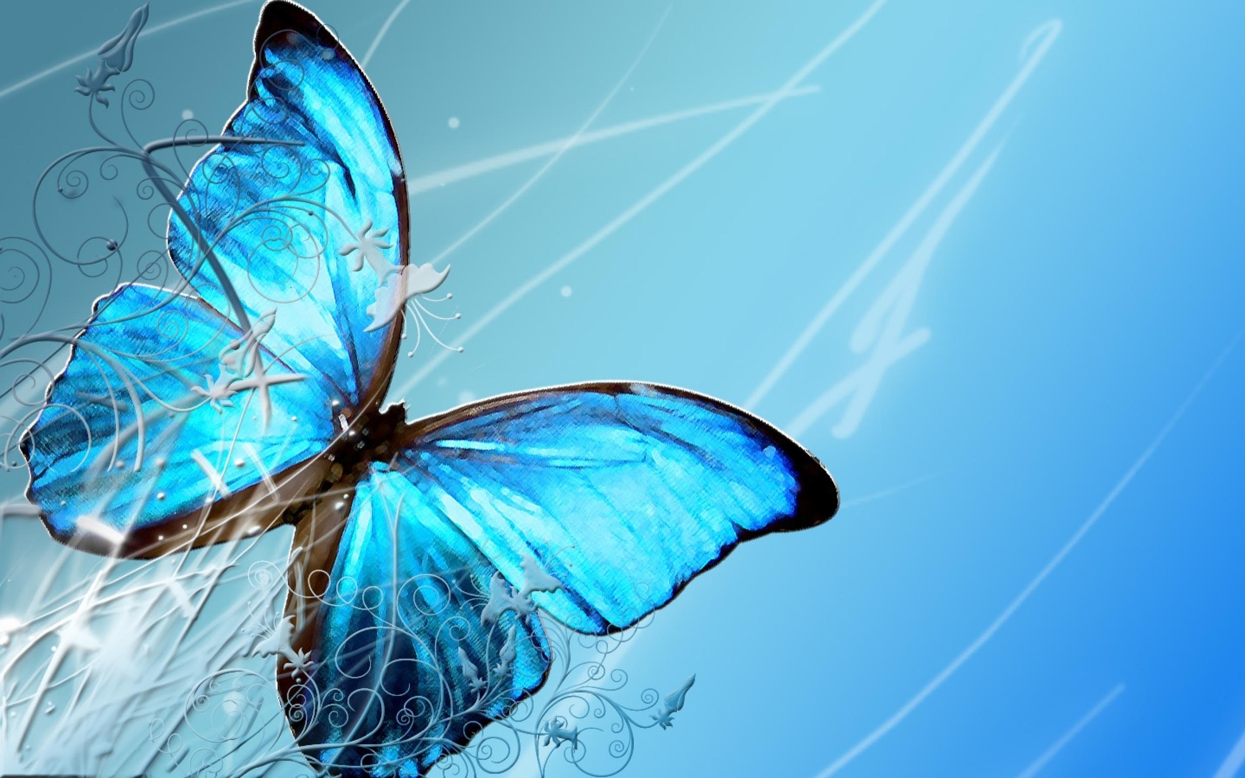 Light Blue Butterfly Desktop Wallpaper in High Resolution at Animals 2560x1600