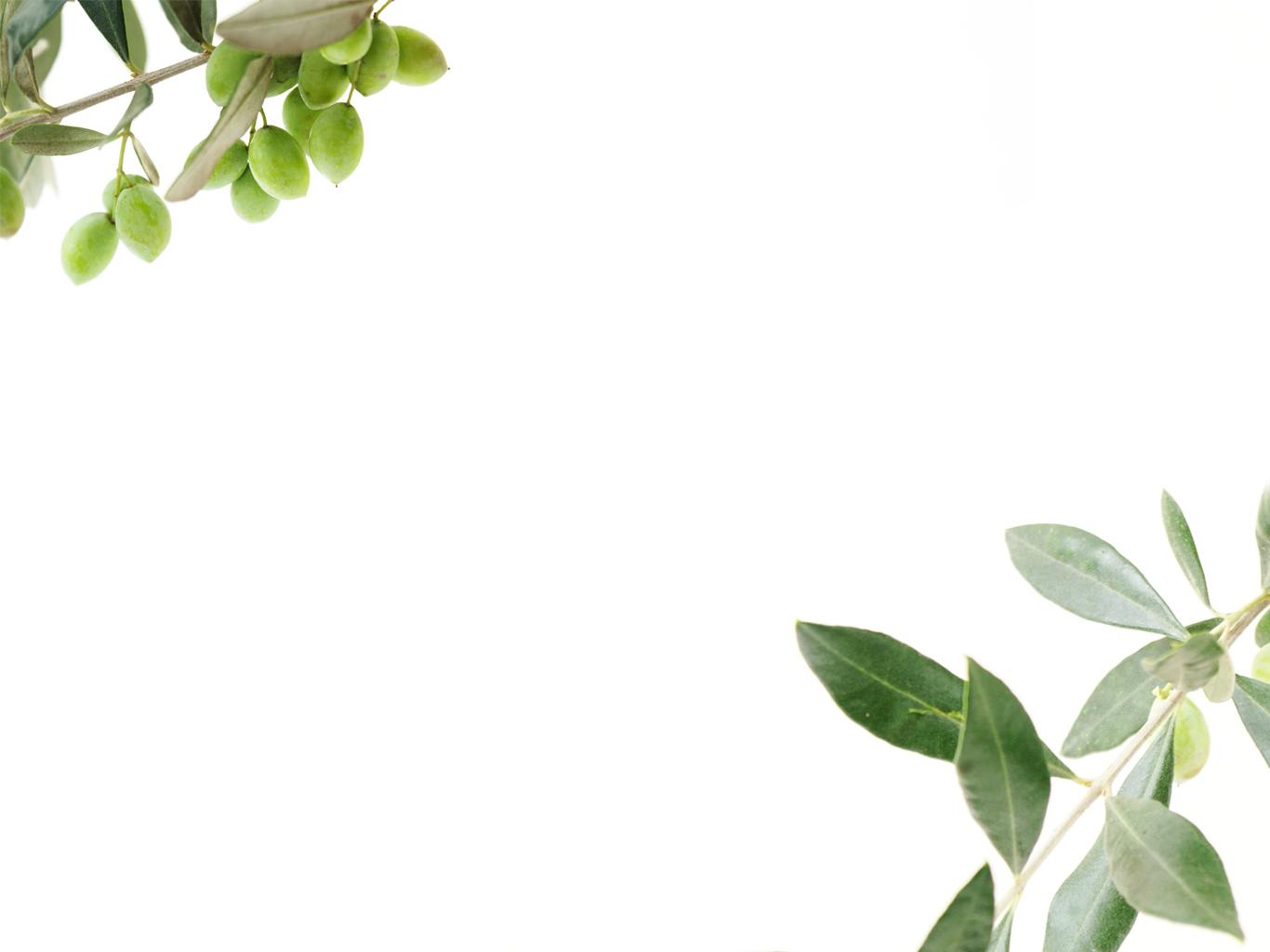 Olive Oil Wallpaper Wallpapersafari