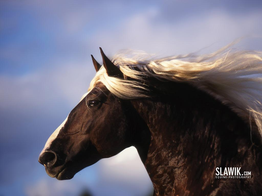 horse wallpaper arabian horse wallpaper beautiful horse wallpaper 1024x768
