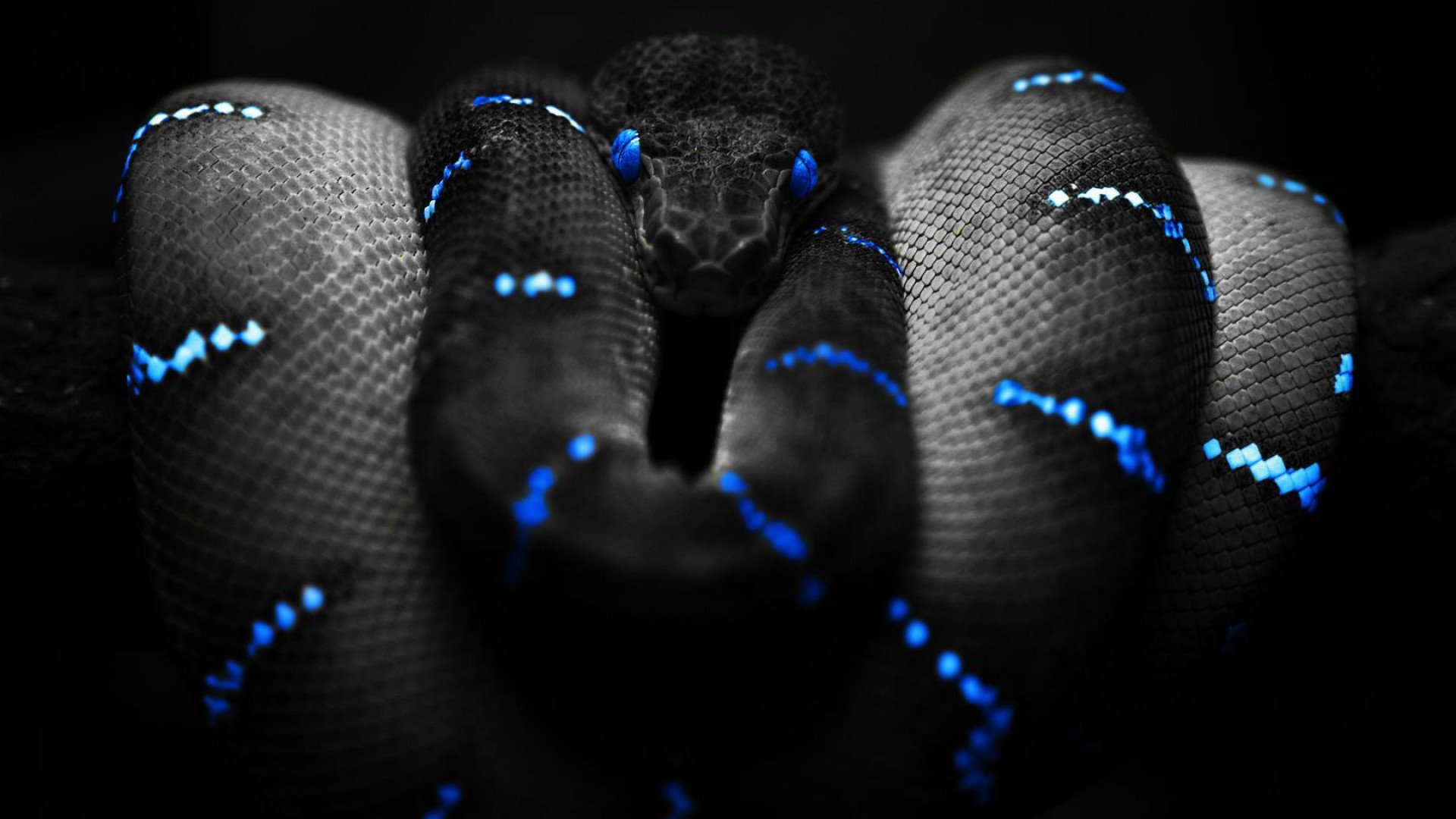 Snake Wallpapers Best Wallpapers 1920x1080