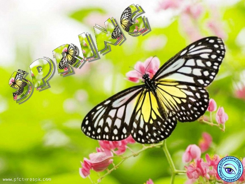 View Spring Butterfly Picture Wallpaper in 800x600 Resolution 800x600