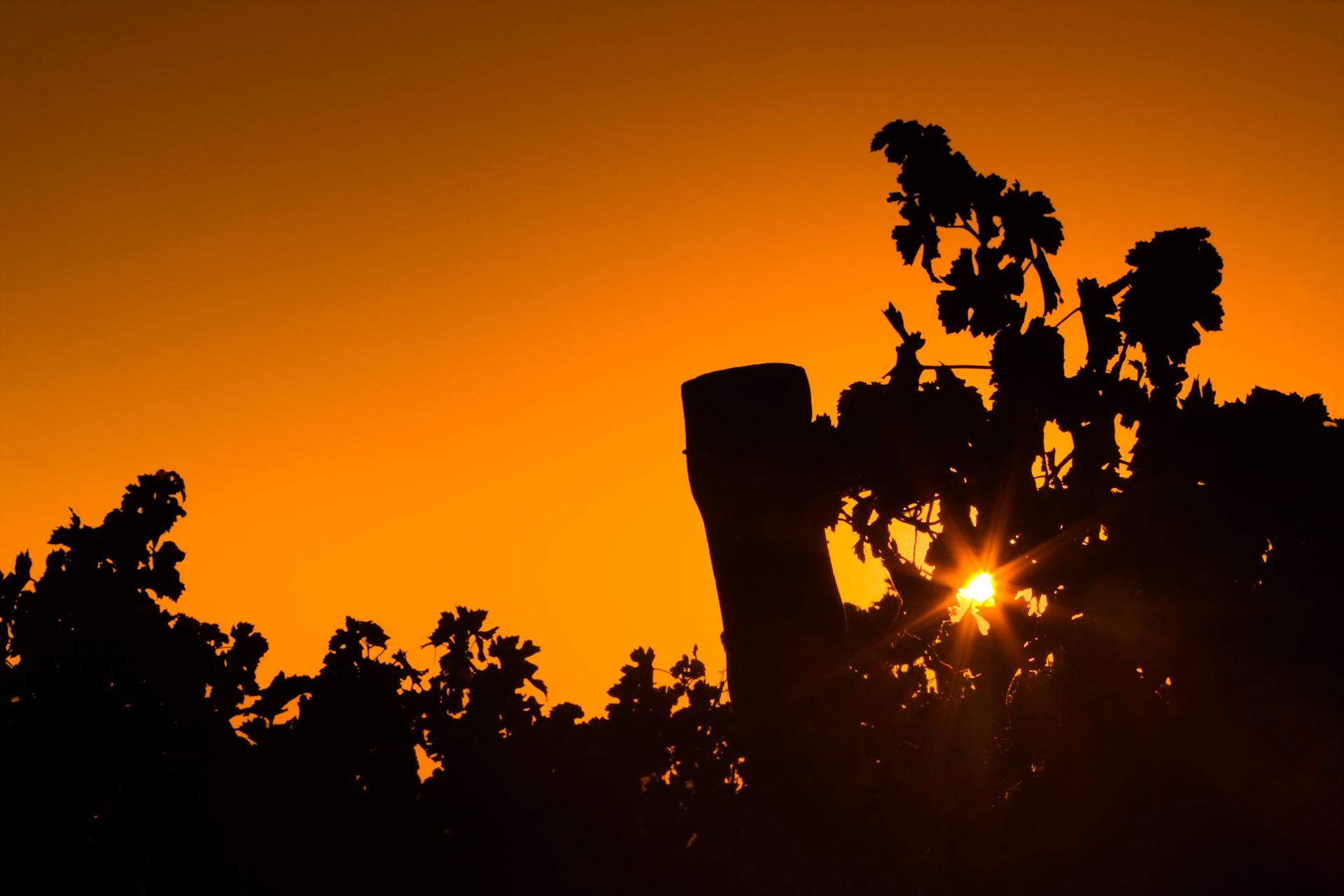 Sunrise at the vineyard KYC 1920x1280