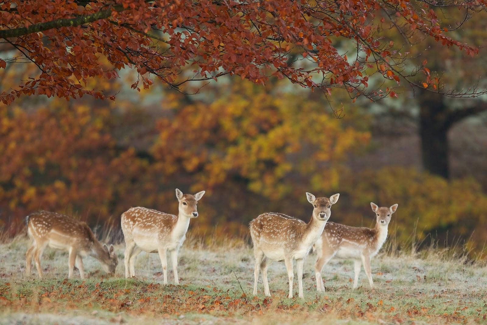 Beautiful Wallpapers deer wallpaper 1600x1066