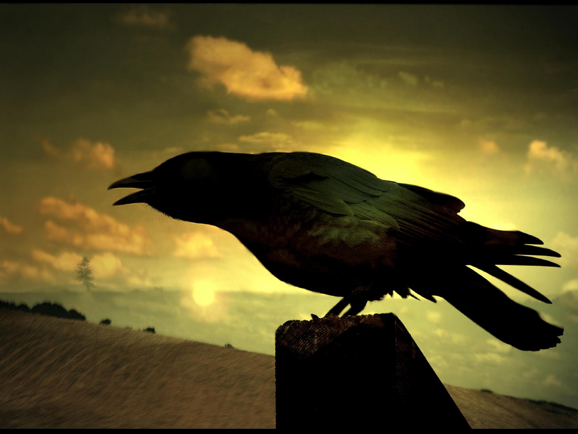 Ravens Wallpaper 1920x1440 Ravens 1920x1440