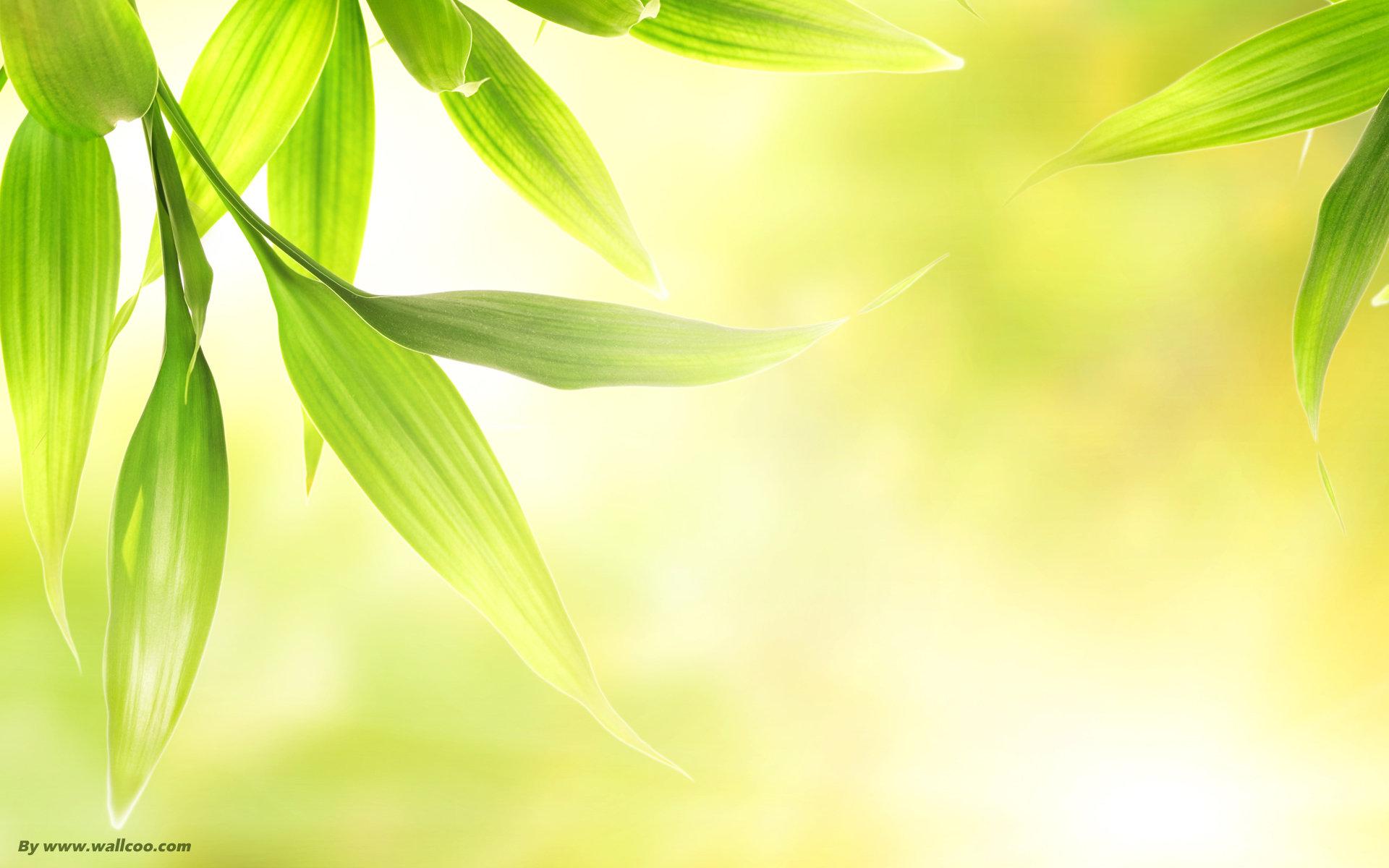Leaves Best Wallpaper Picture v920i   ARASPOTcom 1920x1200